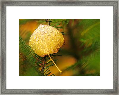 Fall Raindrops Framed Print