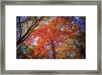 Fall Red Framed Print