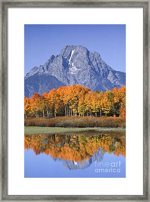 Fall Reflection At Oxbow Bend Framed Print by Sandra Bronstein