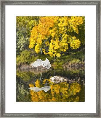 Fall Reflections Framed Print by Chuck Brittenham