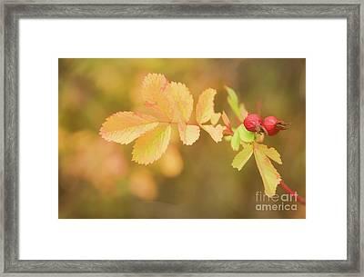 Fall Rose Hips Framed Print
