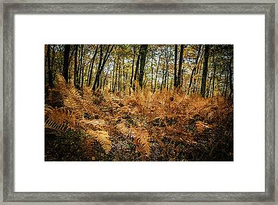 Fall Rust Framed Print