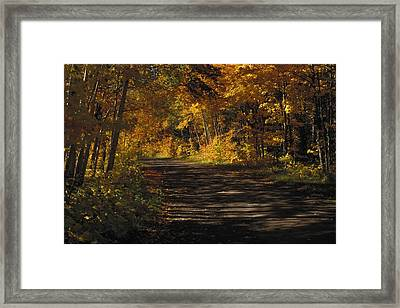 Fall Scene Of A Tree-shaded Road Framed Print