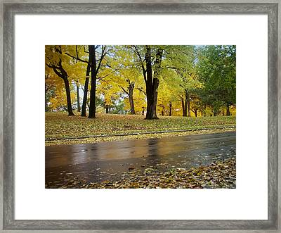 Fall Series 15 Framed Print by Anita Burgermeister