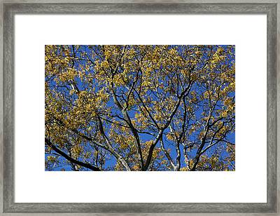 Framed Print featuring the photograph Fall Splendor And Glory by Deborah  Crew-Johnson
