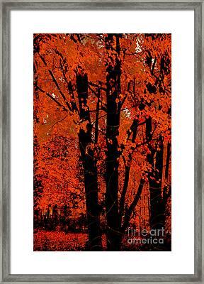 Fall Splendor, Firey Orange Fall Leaves Framed Print by Tina Lavoie
