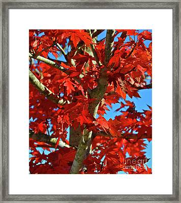 Fall Stars Framed Print