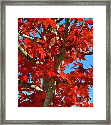 Fall Stars Framed Print