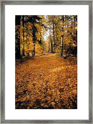 Fall Framed Print by Stephanie Moore