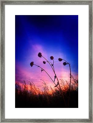 Fall Sunrise Framed Print by Tim Abshire