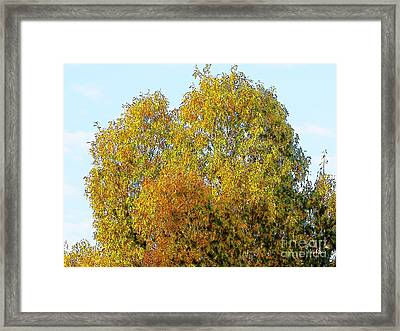Fall Tree Framed Print