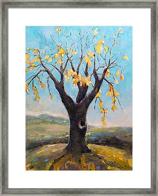 Fall Tree In Virginia Framed Print by Becky Kim