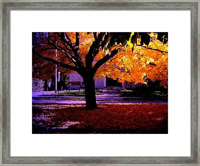 Fall Tree In Woodruff Place Framed Print by Martin Morehead