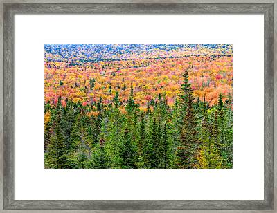 Fall Trees And Evergreens In White Mountains Framed Print
