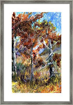 Fall Trees Framed Print by Jimmie Trotter