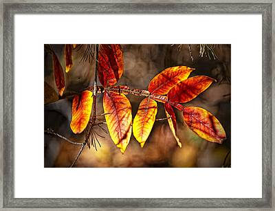 Fall Trees Number One Framed Print by Michael Putnam