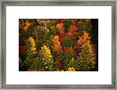 Fall Trees Framed Print