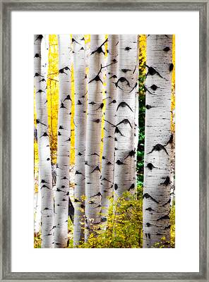 Fall Trunk Show  Framed Print by The Forests Edge Photography - Diane Sandoval