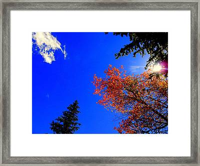 Framed Print featuring the photograph Fall Up by Karen Shackles