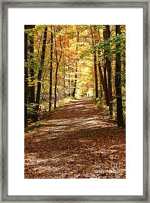 Fall Walk   2295 Framed Print