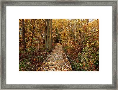 Fall Walk Framed Print by Debbie Oppermann