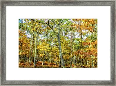 Fall Yellow Framed Print