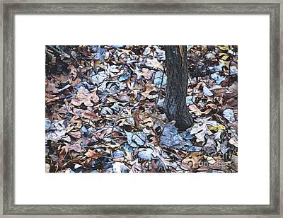 Fallen #1 Framed Print