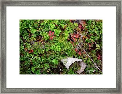 Fallen #2 Framed Print