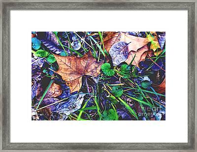 Fallen #3 Framed Print