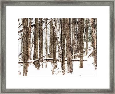 Fallen 6 - Framed Print