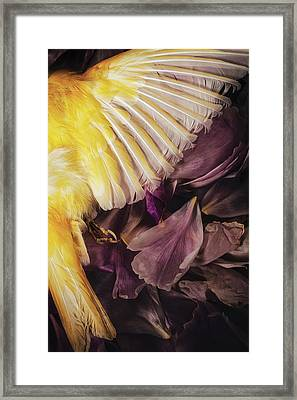 Framed Print featuring the photograph Fallen by Amy Weiss