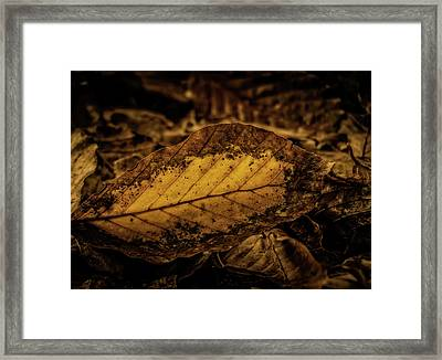 Framed Print featuring the photograph Fallen Color by Odd Jeppesen