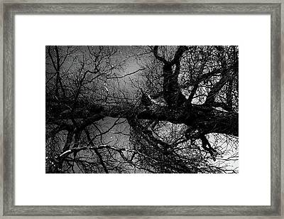 Fallen Dark Wood Forest Framed Print