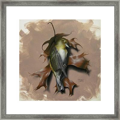 Fallen Finch Framed Print by Timothy Jones