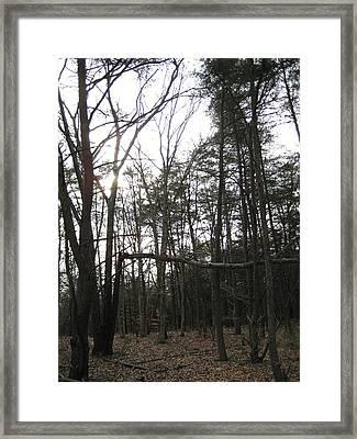Fallen Giant Framed Print by Jennifer  Sweet