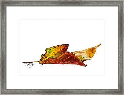 Fallen In Fall  Framed Print by Rahat Iram