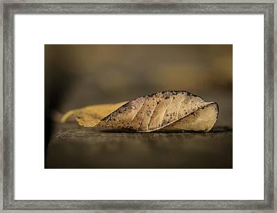 Fallen Leaf Framed Print by Hyuntae Kim