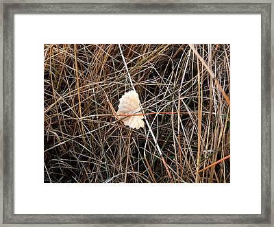 Fallen Leaf Framed Print
