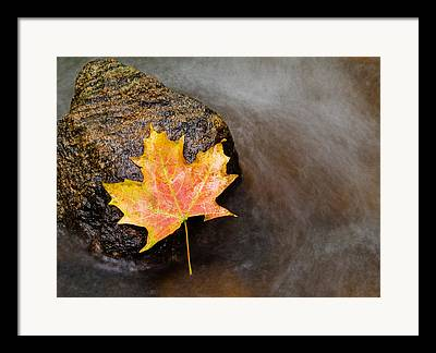 Fall Colors Photographs Framed Prints
