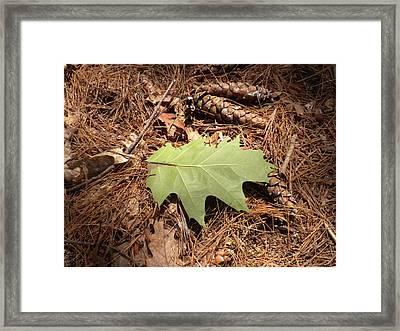 Fallen Leaf Framed Print by Karen Moulder