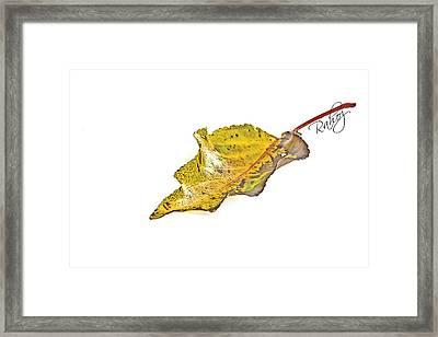 Fallen Leaf Framed Print by Rahat Iram