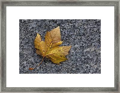 Fallen Leaf Framed Print by Robert Ullmann