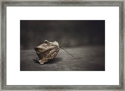 Fallen Leaf Framed Print by Scott Norris