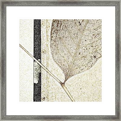 Fallen Leaf Two Of Two Framed Print by Carol Leigh
