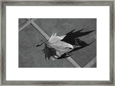 Fallen Leaf Framed Print by Yavor Kanchev