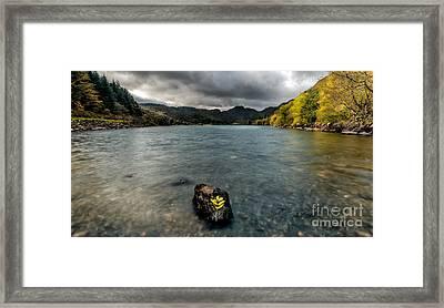 Fallen Leaves Framed Print by Adrian Evans