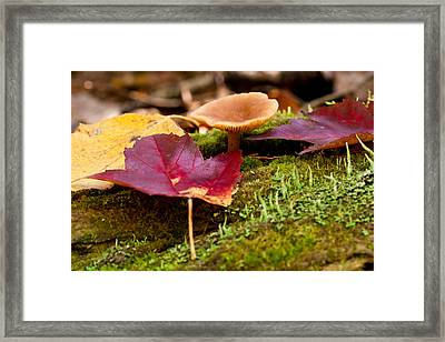 Framed Print featuring the photograph Fallen Leaves And Mushrooms by Brent L Ander