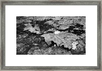Fallen Leaves Framed Print by Andre Panatto