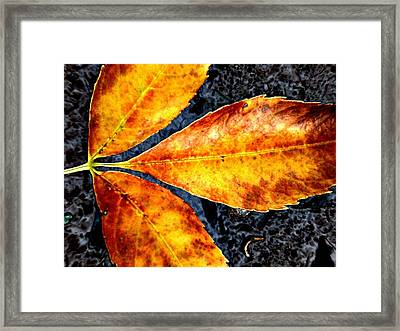Fallen Leaves Framed Print by Beth Akerman