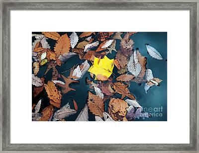 Fallen Leaves Framed Print by Hideaki Sakurai